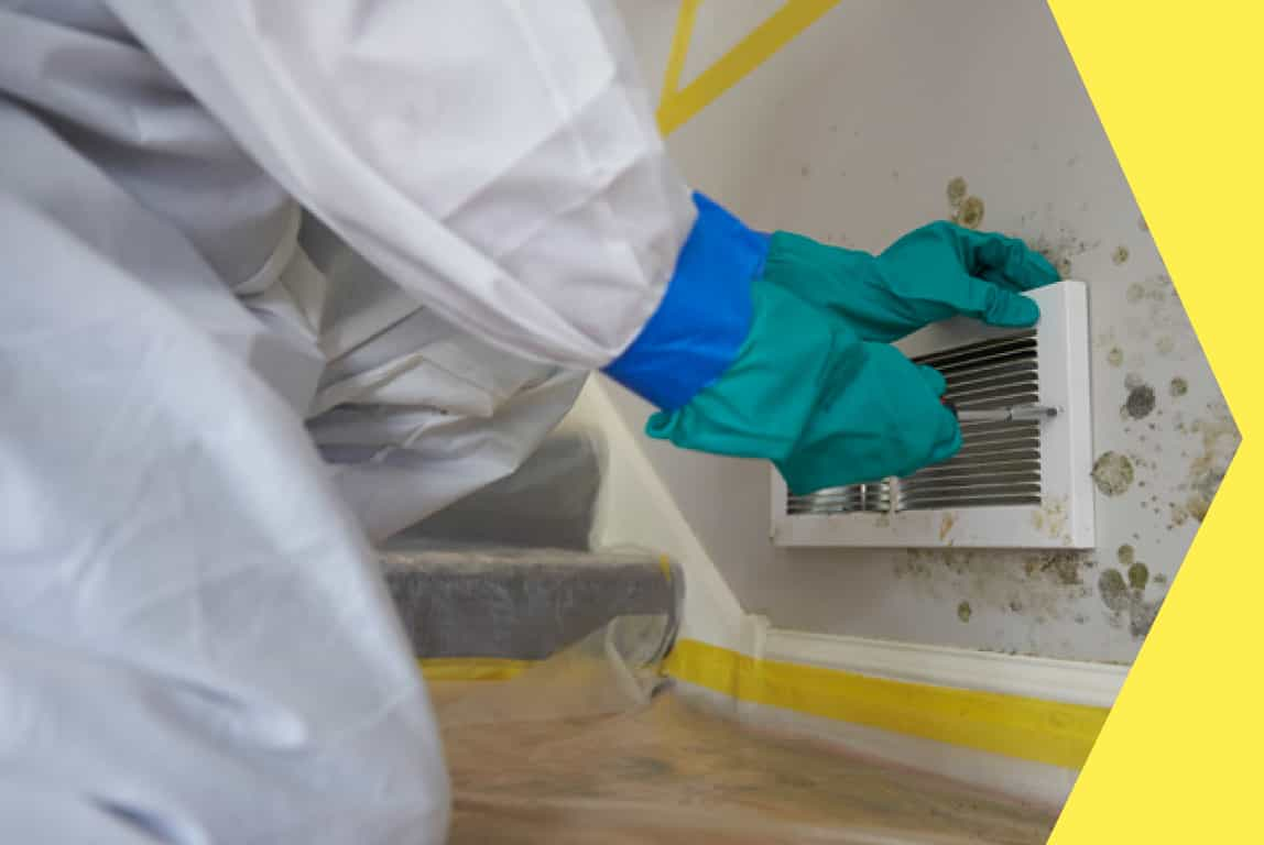 Mold Remediation in Southwest Florida