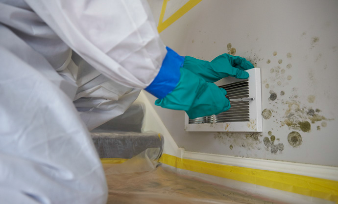 Read more about the article Types of Mold Found Indoors